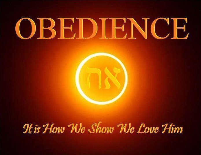 Obedience 05